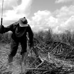 ONU manifesta preocupação com PL que altera conceito de trabalho escravo no Brasil